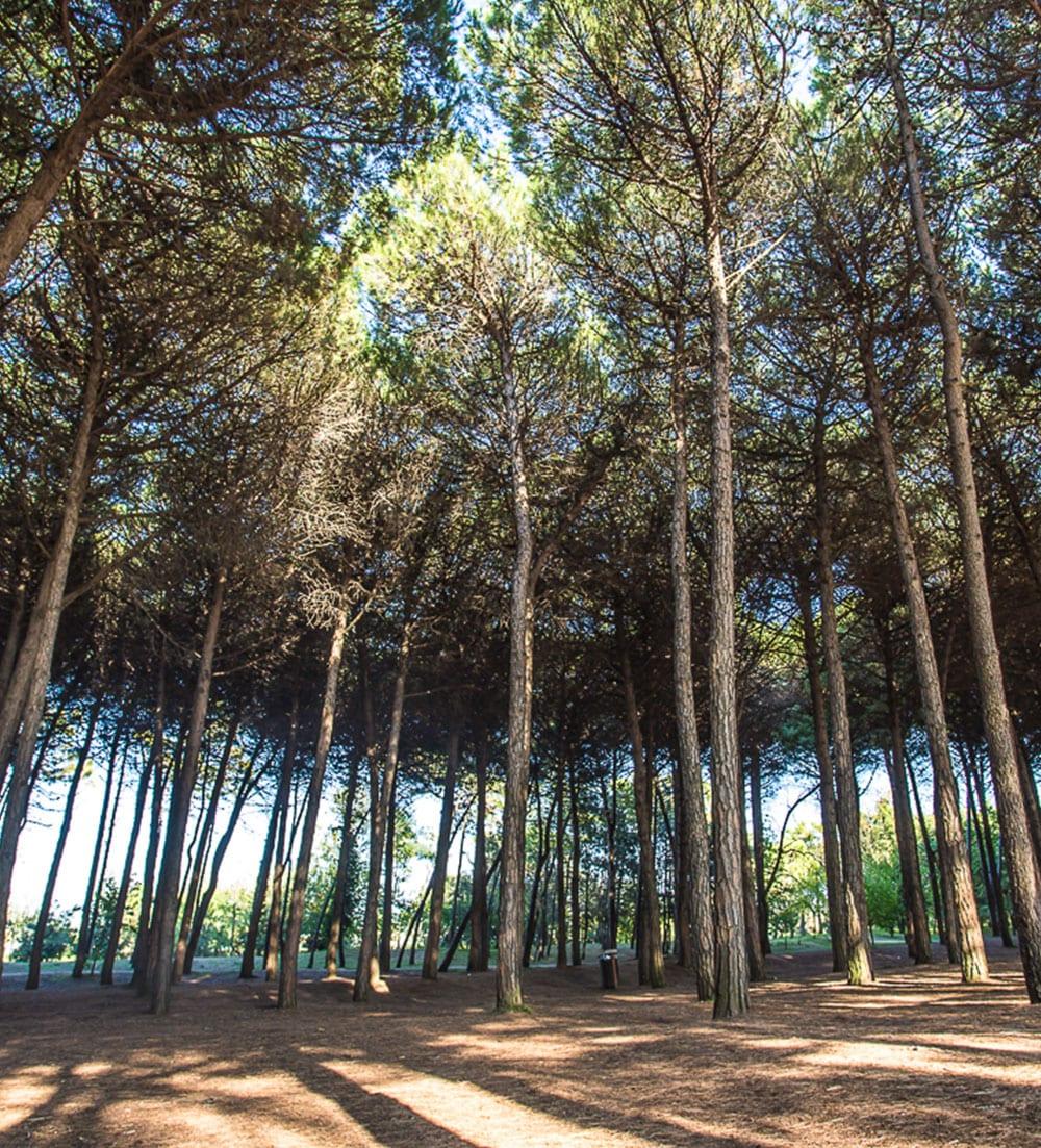 gallery-pineta-garden